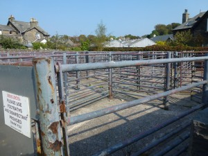 Cattle market pens