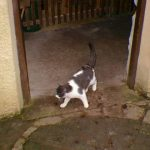 Oats the cat in the mill doorway