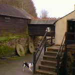 Mill top yard (and Molly the dog)