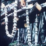 Stott Park, 1967 - bobbins and birch (1-110)