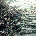 Rusland Valley - bobbin fodder, 1983 (9-26)