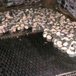 Oakbank, 1964 -drying bobbins (55-14)