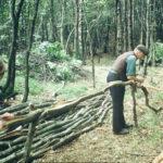 Bark peeling, Sep1970 (09-17)