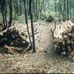 Oak bark and rustic poles, Sep 1970 (09-20)